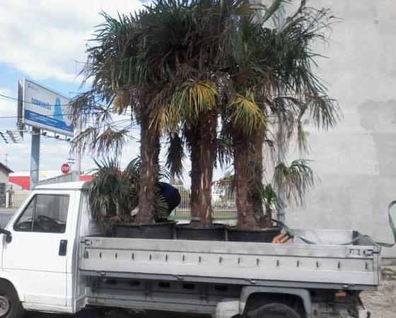 Selidba kućnih biljaka – saveti za bezbedan prevoz
